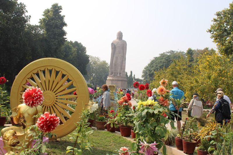Giant Buddha statue Plant Tree Flower Flowering Plant Architecture Sculpture Nature Human Representation Statue