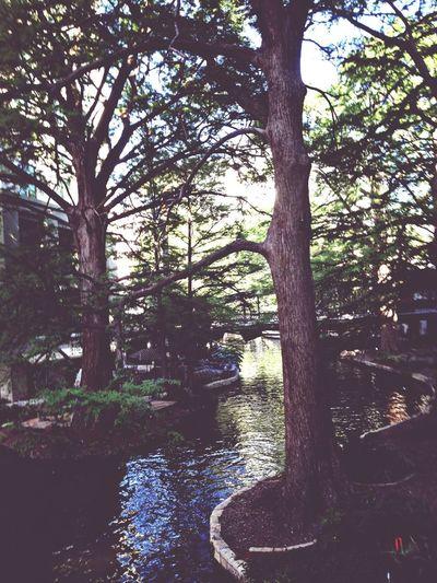 Nature Trees Pretty