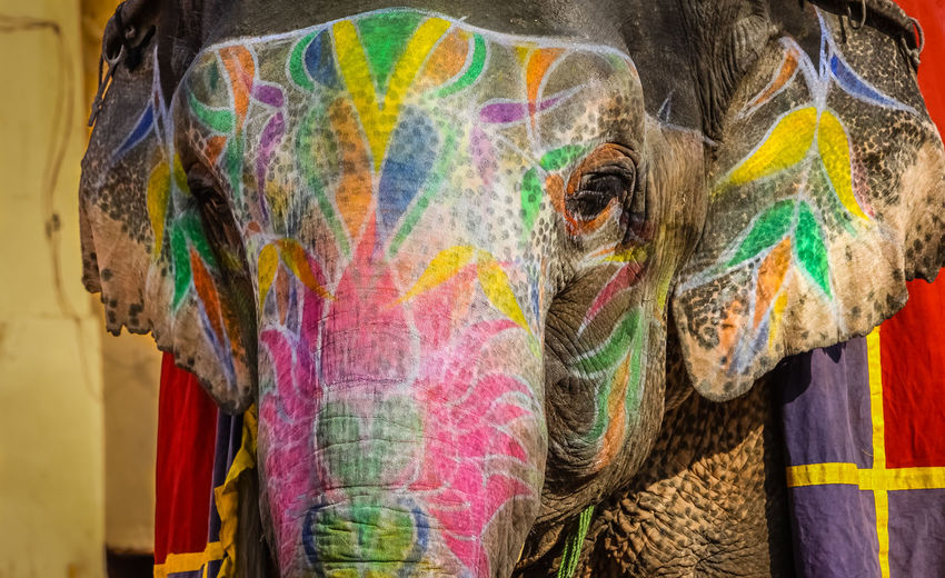 Close-Up Of Painted Elephant