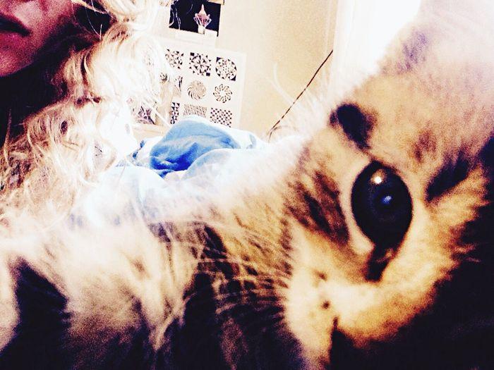 Ну он просто очень крут Котейка Kitten 🐱 малышек Борис