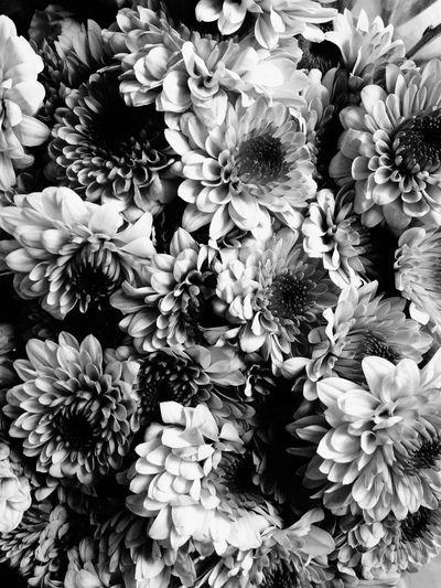 Freshness Flower Crisantemos Blackandwhite Blackandwhite Photography