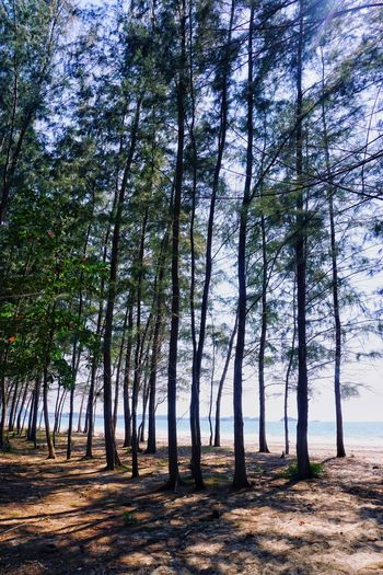 Tree Nature Forest No People Scenics Tranquility Beauty In Nature Tranquil Scene Growth Beachside Beach Freedom Freshness