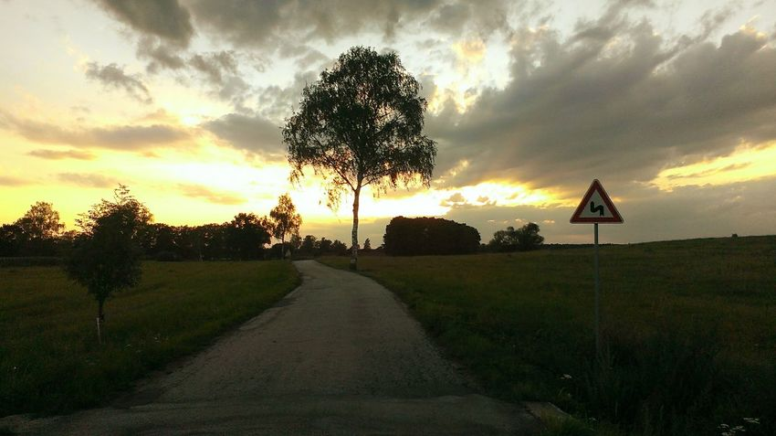 Tree Sunset Sky Nature Outdoors Grass Road Sign First Eyeem Photo
