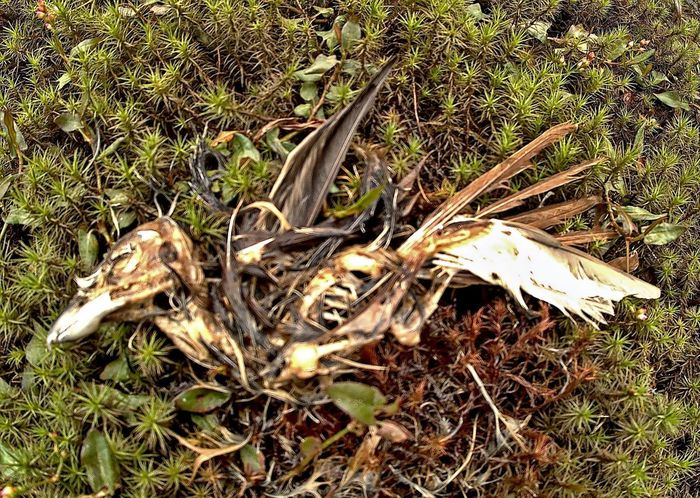 No People Animal Bone Nature Field Day Outdoors Growth Skeleton Close-up Grass