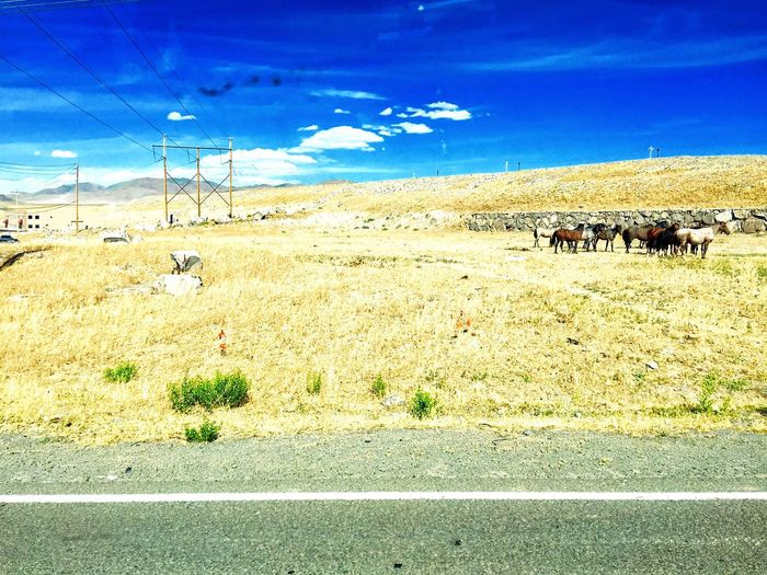 Wild horses outside of Reno Nevada Wild Horses Wildlife Wildlife Photography Nature Tallac Desert Landscape Great Basin High Desert High Desert Wildlife Scenery Landscape