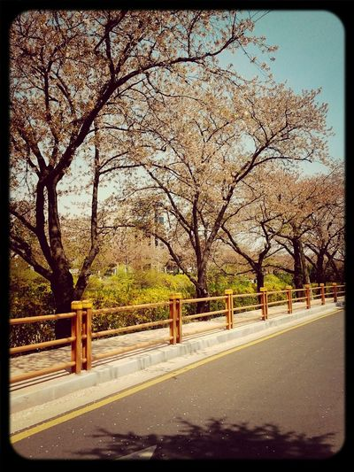 I'm waiting spring~ come come to me :> Spring Taking Photos Enjoying Life CND Mona