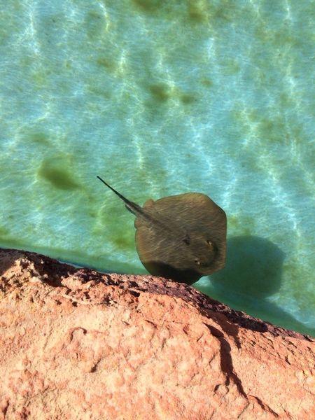 Miles Away Sea Water Sea Life Nuture