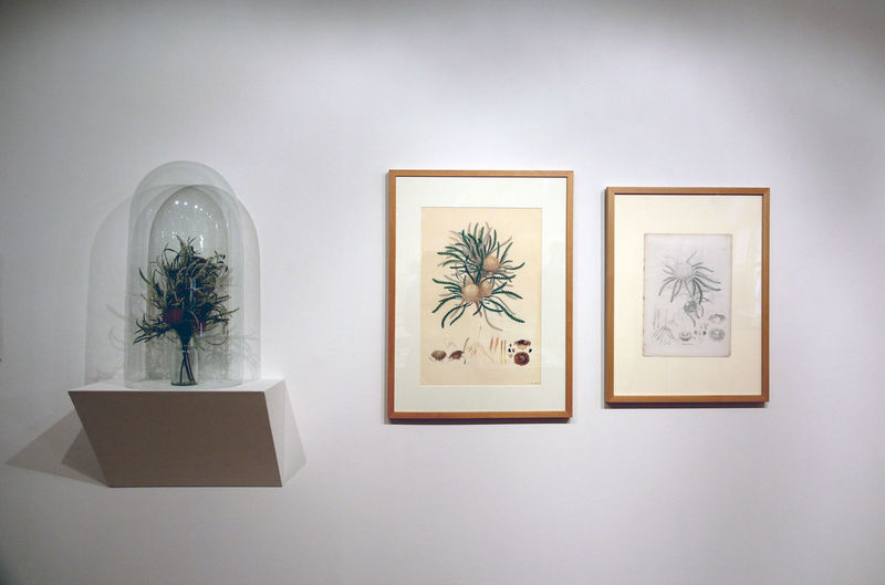 Botany Architecture Art Beauty Bell Botany Close-up Culture Day Drawings Exhibition Flower Flowers Growth Illustration Indoors  Museum Nature No People Picture Frame Plant Plants Potted Plant Shadows Truth And Beauty Wall