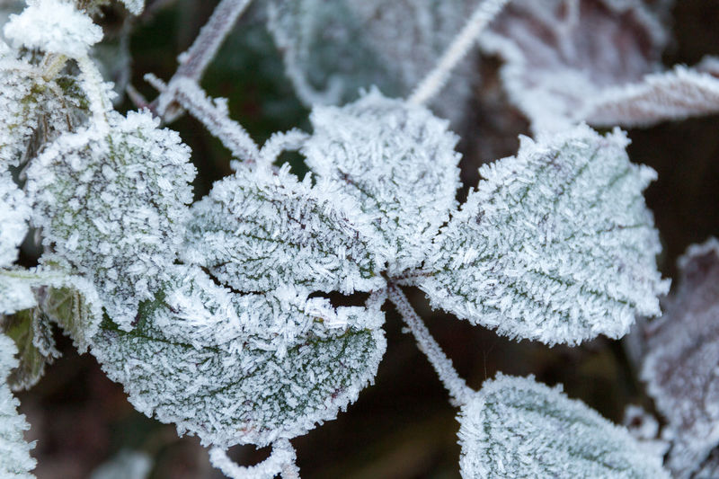 Close-up Cold Temperature Frost Frosty Mornings Frozen Ice Ice Crystal Nature Winter