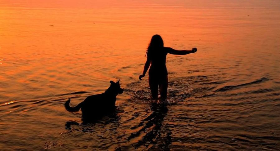 Live For The Story Sunset Dog One Person Sand Silhouette People Lifestyles Domestic Animals Full Length Pets Outdoors Adult Beach Only Women Water Jumping Women Beauty One Woman Only Nature