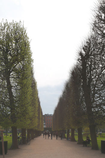 Kongenshave Parks Trees Architecture Bench Built Structure Clear Sky Copenhagen Day Direction Footpath Full Frame Growth Kongens Have Nature No People Outdoors Park Park - Man Made Space Plant Sky The Way Forward Tranquility Tree Treelined