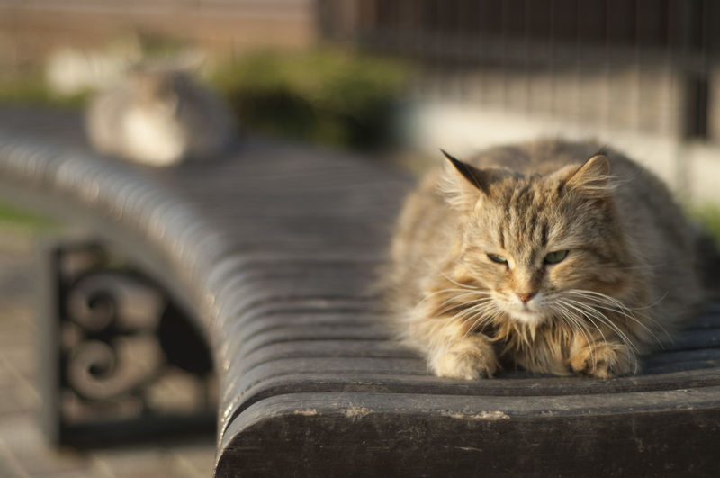 друзья Коты Nikon Nikond2xs весна таганрогский залив каменка Закат ейск Pets Feline Domestic Cat Portrait Animal Themes Close-up Cat