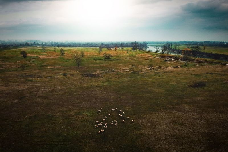Landscape Grass Field Cloud - Sky No People Nature Beauty In Nature Outdoors Tranquility Sheep Scenics Aerial View Aerial Shot