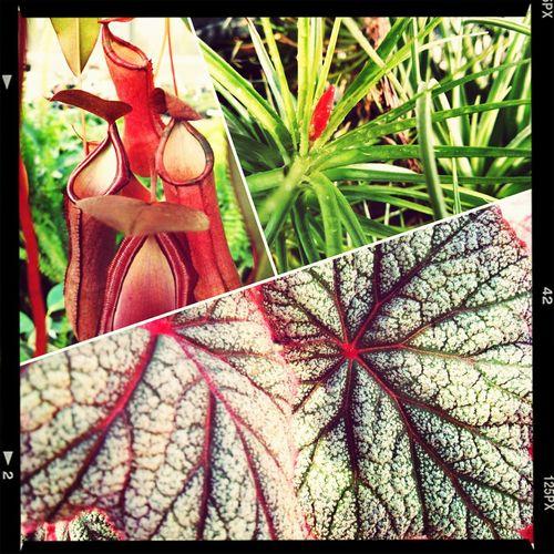 Plants Airbromeliad Bizarreplants 🌱🌿