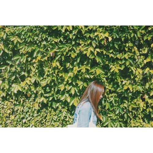 Green Dear Kei