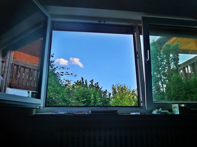 Inside Looking Out View Through My Window Window Window Reflections Indoors  Low Angle View Nature Outside Blue Sky White Clouds Summertime Sunny Day No People Day Sky Tree Close-up Germany🇩🇪 Mix Yourself A Good Time The Week On EyeEm