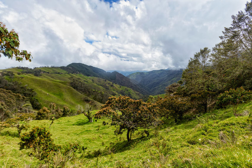 Verdent green valley in the mountains outside of Salento, Colombia. Cloud Colombia Farm Hiking Palm Pasture Quindío Rural Tree Trip Andean Cauca Colombian  Countryside Forest Hike Jeep Landscape Outdoors Quindío Salento Tolima Tree Trek Wax