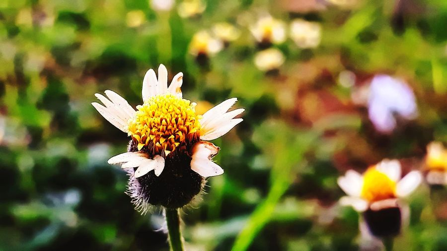 wild flower grow wild weeds unwanted in agricuture field vivrant colors macro minimalist EyeEm Selects Flower Head Flower Perching Butterfly - Insect Insect Petal Close-up Plant Pollination Pollen In Bloom