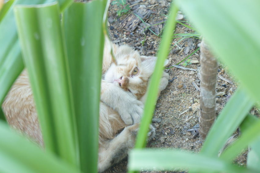 i can see you EyeEmNewHere Cat Playful Cat Stray Cat Animal Themes Close-up Grass Plant Green Color Blade Of Grass Plant Life