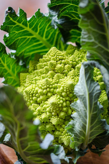 Meal Broccoli Cauliflower Close-up Food Food And Drink Foodphotography Freshness Garnish Gourmet Green Color Healthy Eating Nature No People Organic Plant Part Plate Raw Food Romanesco Still Life Table Tabletop Vegetable Wellbeing Yummy