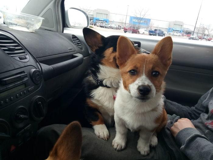 Fraya Dog Puppy