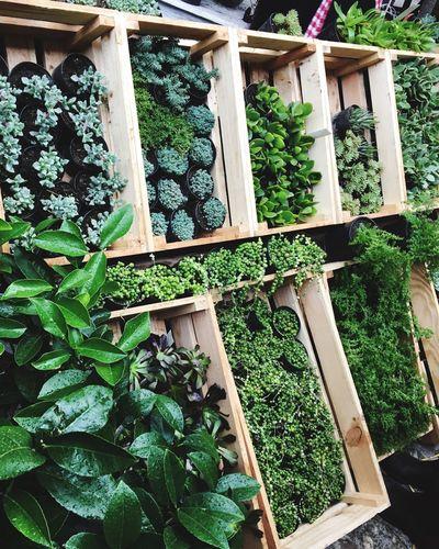 Plant Green Color Nature Saculent