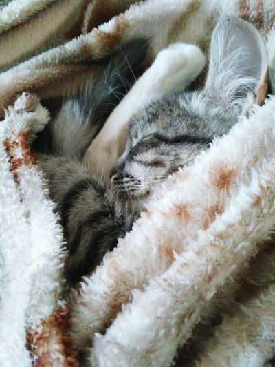 Domestic Cat Domestic Animals Pets Mammal Day No People Animal Themes Indoors  One Animal Nature Kitty!  Wiskers Softness Love Kindness