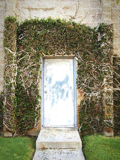 Door Brick Wall Fantasy Secret Garden Gardens Vines Grass Steps Doorway Brick Building Concrete Wall
