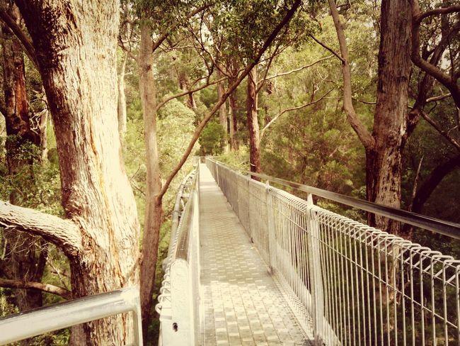 Treetopwalk Australia Twofrenchiesinaustralia Travel