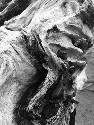 Textured  Tree Trunk Rough Tree Driftwood Close-up Beauty In Nature Outdoors Dead Tree Abstract Nature