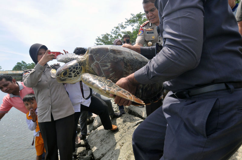 Indonesian release Sea Turtle_ Animal Wildlife Day Domestic Domestic Animals Group Of People Holding Leisure Activity Mammal Men Nature One Animal Outdoors People Pets Real People Vertebrate Women