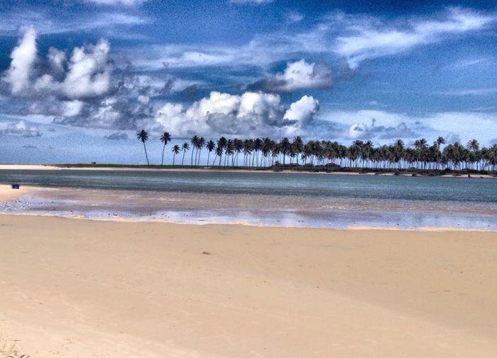Brazil Bahia Beach Sunny Day