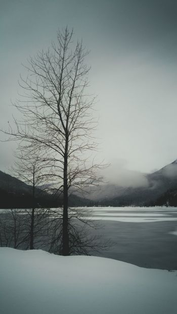 Sombre Somber Trees Tree Lake Mountain Mountains Nature Winter Snow Cold Wild Beautiful Rockies Rocky Mountains Cloud Bare Tree Bleak Artistic Art Subtle Stark