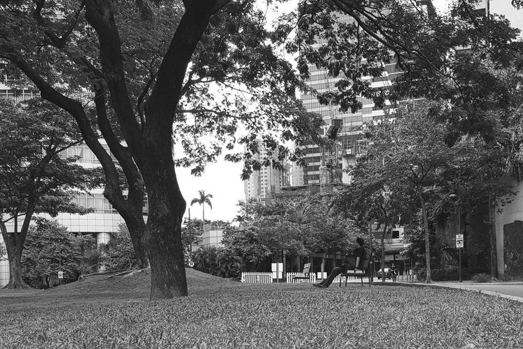 BGC Mobilephotography Philippines Grass Tree BGC Taguig Blackandwhite Landscape Tree Grass Men Day Outdoors Tree Trunk Black And White Friday