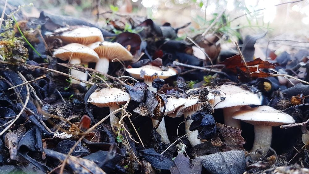 Nature No People Day Mushroom Outdoors Fungus Animal Themes Close-up Beauty In Nature Toadstool Mammal