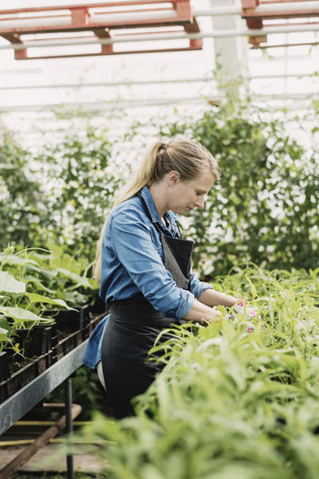 Side view of senior man working on plants
