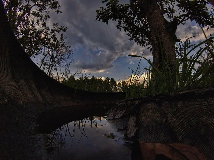 Tree Cloud - Sky Sky Reflection Nature No People Built Structure Day Outdoors Architecture Water Low Angle View Beauty In Nature