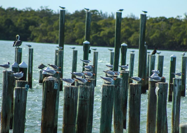 For the Birds Birds In A Row Wooden Posts Nature Outdoors Tranquility