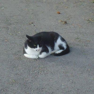 Parquecervantes Gato Gatocallejero Cat Streetcat Kissa Katukissa Blackandwhitecat Gatoblancoynegro Mustavalkoinenkissa Barcelona Bcnexploradores Bcnexplorers Thebarcelonist