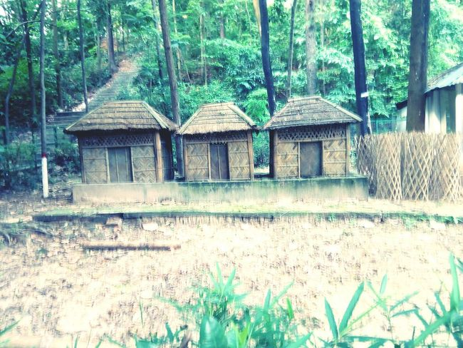 Tree Growth No People Built Structure Architecture Plant Nature Outdoors Village View Bamboo Hut Bamboo House Peace ✌ Hillview Three Quarter Length The Architect - 2017 EyeEm Awards