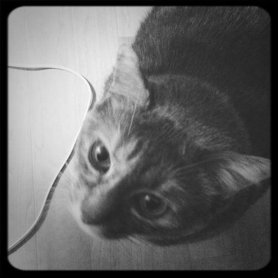 My Cat ❤❤