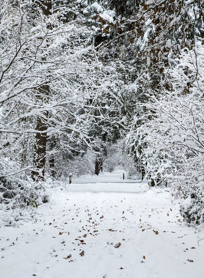 Snow covered Christmas trees in Stoke Lyne woods near Bicester Christmas Snow ❄ Snowy Woodland Snwoing Stoke Lyne Woods Trees Xmas Tree Beauty In Nature Christmas Tree Cold Temperature Day Nature No People Outdoors Snow Snowy Woods Tranquility Tree White Color Winter Woods Woodscapes
