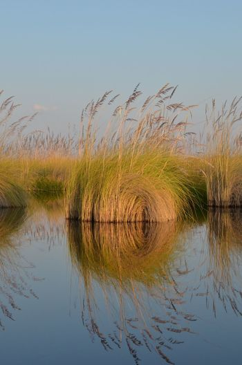 Okovango Reflections Beauty In Nature Day Grass Lake Nature No People Okovango Outdoors Reflection Sky Tranquil Scene Tranquility Water