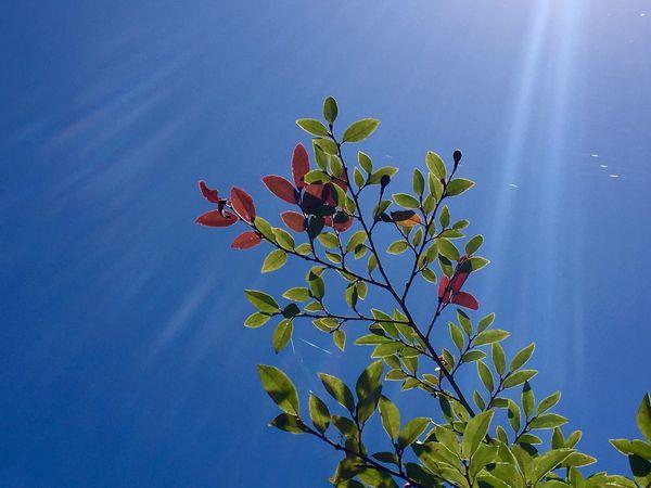 暑いけど気持ちいい。It is hot, but cool. Green Red Bulue Sky IPhoneography Summer