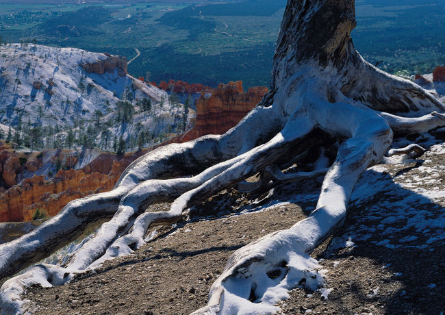 Landscape view after winter snowy landscape Grand Canyon Natural Nature Tree United States Western America Winter Beauty In Nature Canyon Day Dead Wood Geological Landscape Landscape Mountain Nature No People Outdoors Physical Geography Rock - Object Scenics Sky Snow Snow Scene  Snowflake Texture