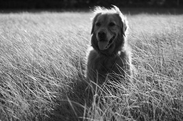 Walking Around Blackandwhite Momochrome Dogslife Dog Days