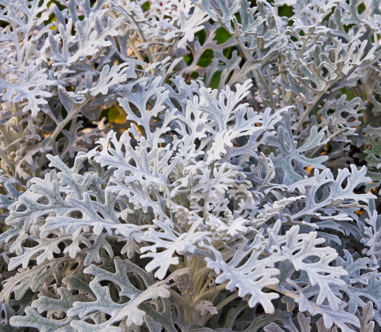HIGH ANGLE VIEW OF SNOW ON PLANT