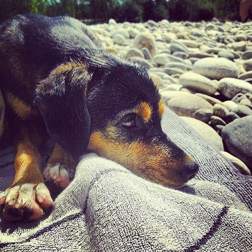 Mia Cane Dog Ticino