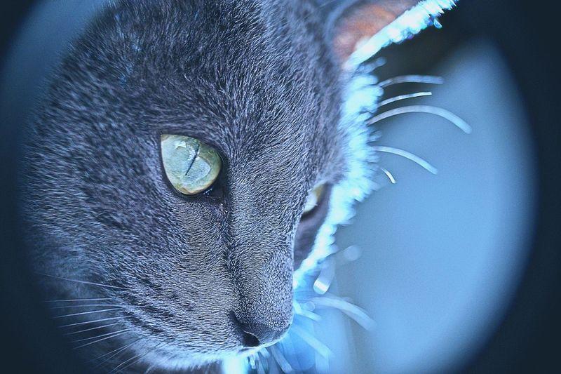 Detail shot of cat looking away