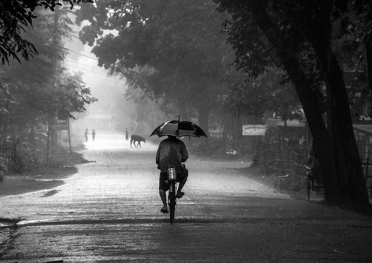 Nostalgia Tree Transportation Plant Bicycle Road Full Length Nature Umbrella Rear View One Person Rain City The Way Forward Wet Street